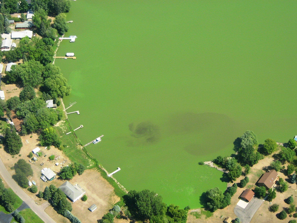 An algae bloom on Little Rock Lake // Photo courtesy Minnesota Pollution Control Agency