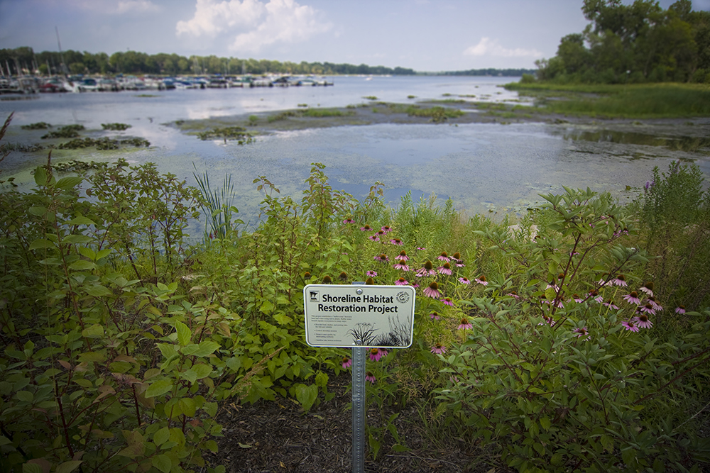 The shoreline of a crowded lake // Photo courtesy Minnesota Pollution Control Agency