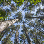 Seeing the Forest for the Trees: The sustainability of Minnesota's logging industry