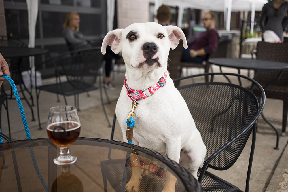 A dog enjoying LTD Brewing Company // Photo by Tj Turner
