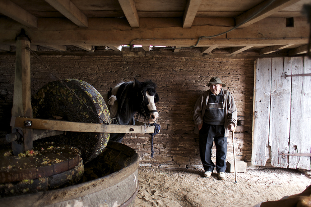 Pye, the horse, works the cider mill with help from Sam Williams at Fair Oaks Cider in Herefordshire, England // Photo by Jenny Halse