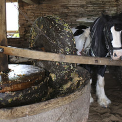 Draught Horses, Distillery Cats, and Hop Yard Sheep: How animals bring you your drinks