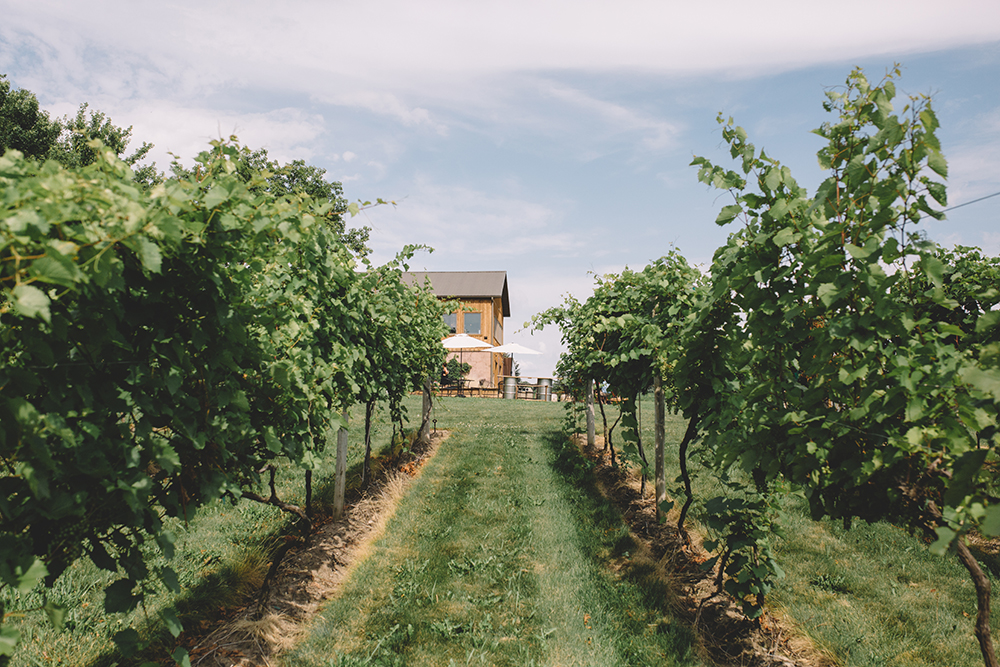 The vines and tasting building of Schram Vineyards // Photo by Sam Ziegler