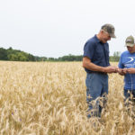 A Pocket Full of Rye: How a lowly, northern grain is mounting a comeback through whiskey