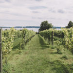 The Waconia Wine Triangle: How a Twin Cities suburb became a hotbed for cold-climate wines