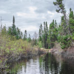 Casting for Brook Trout Ghosts
