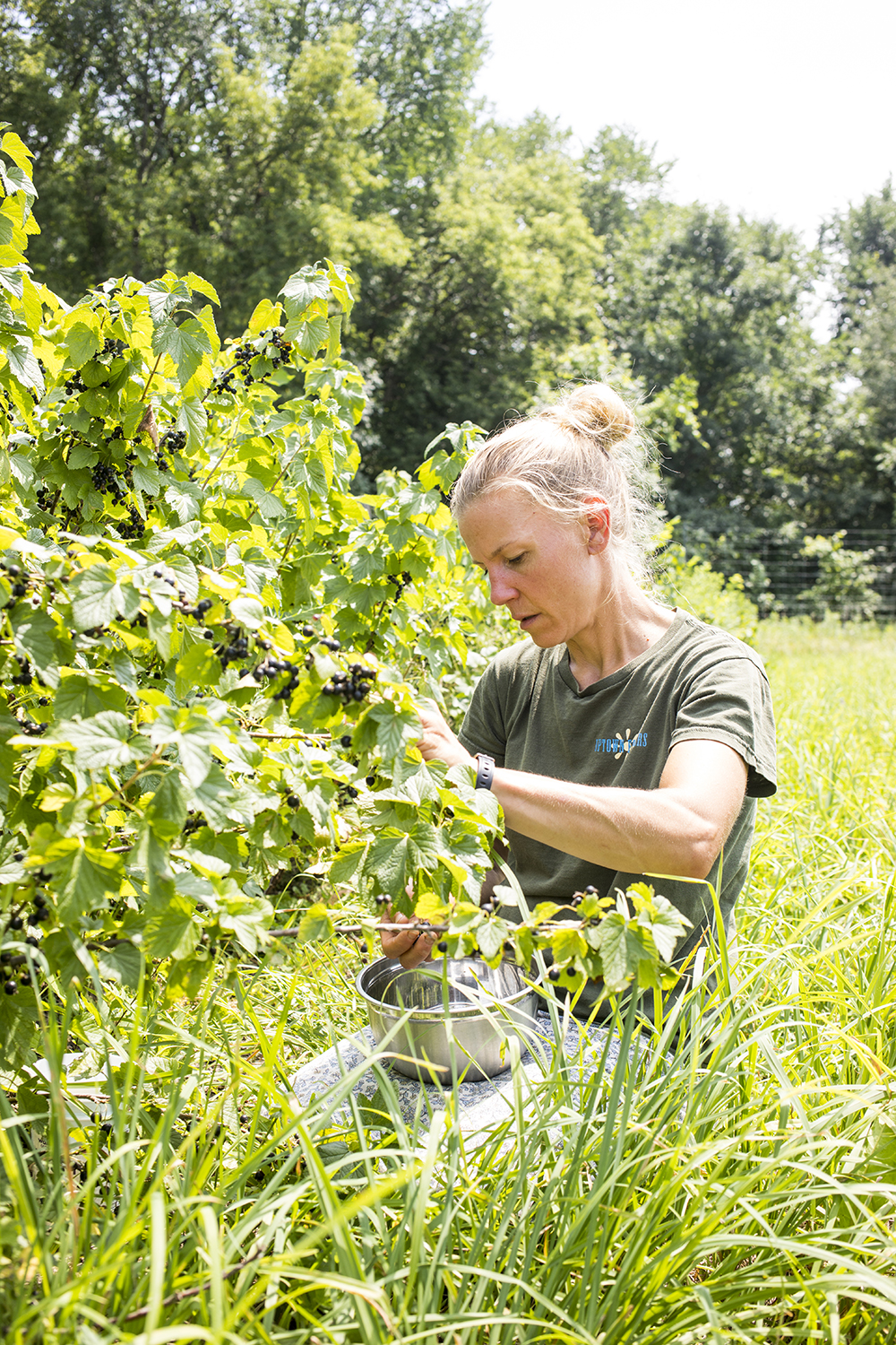 Tracy Jonkman, co-owner of Keepsake Cidery, picks black currants // Photo by Tj Turner