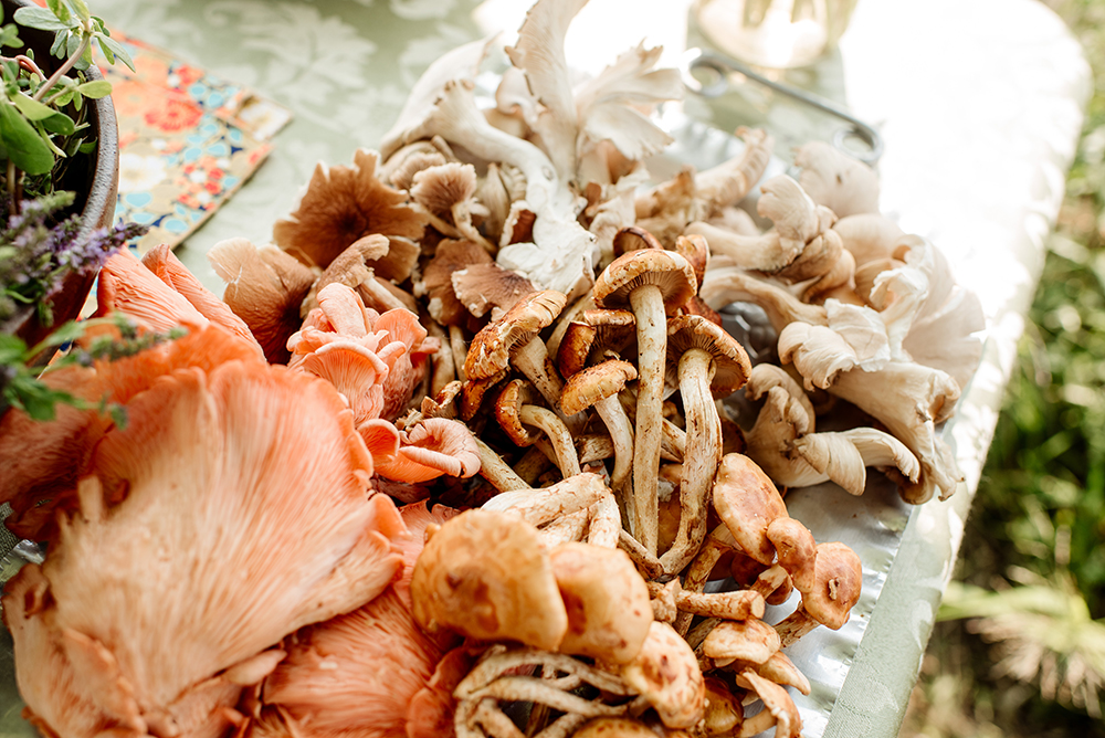 A variety of the mushrooms grown at Cornucopia // Photo by Becca Dilley