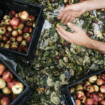 The Growler's Field Guide to Cider, Chapter 3: The Apples Behind The Cider