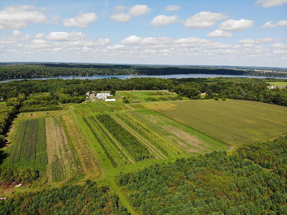 An aerial view of the hopyard at St. Croix Valley Hops // Photo courtesy St. Croix Valley Hops