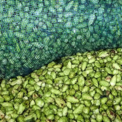 The Mash-Up: Fresh hop beers, Oktoberfests, and Autumn Brew Review collabs