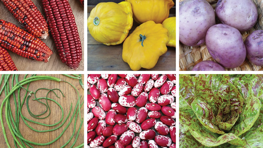 William Woys Weaver of 'Heirloom Vegetable Gardening' on seed saving, roguing, and local food