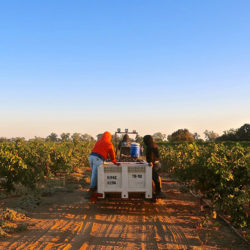 3 Lodi wineries offering authenticity and intrigue in the bottle