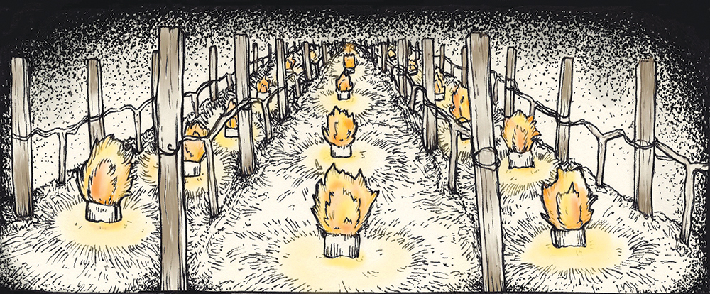Fires lit in between rows of grapes at a German vineyard to mitigate damage from frost // Illustration by Andrea Jacobs