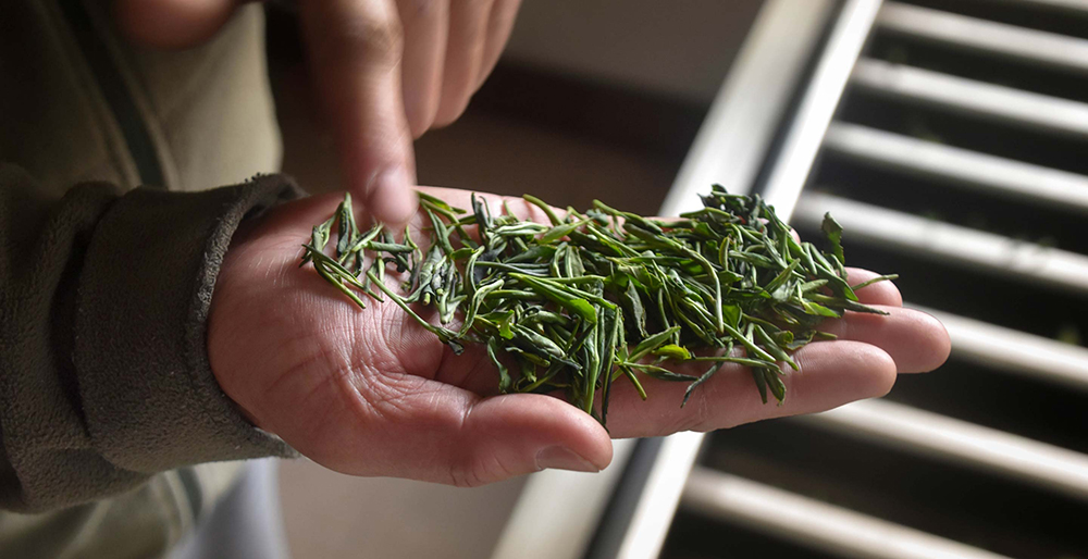 Flat pressed tea leaves in the workshop of the He Family in the Laoshan province // Photo courtesy Verdant Tea