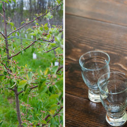 Essay: Old World Lessons on Spontaneous Fermentation and 'Wild' Cider