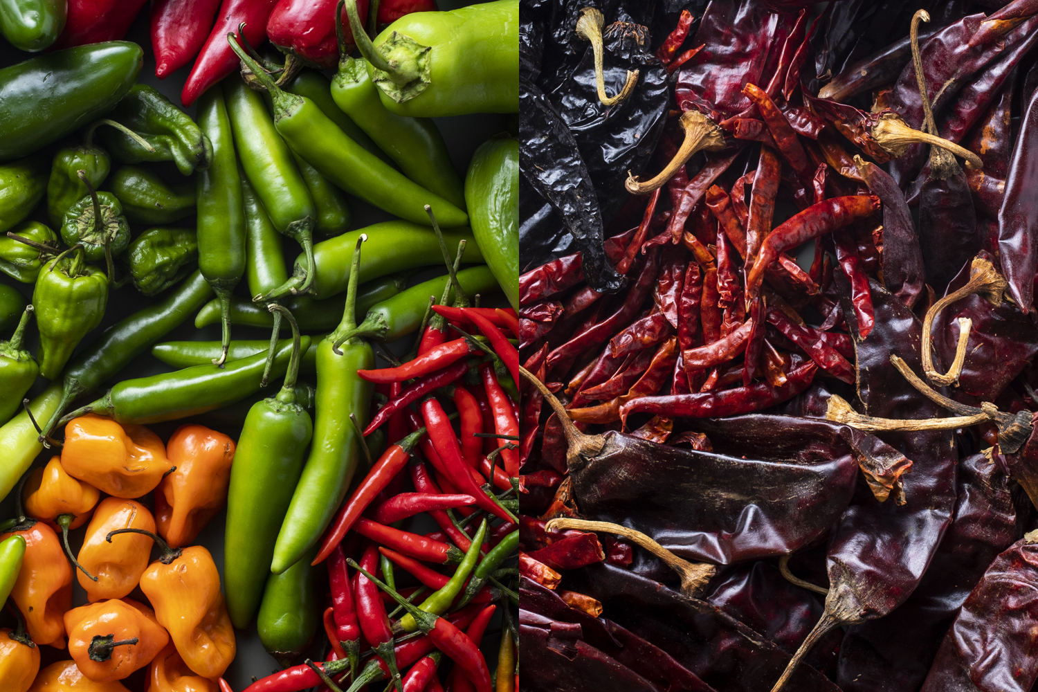Fresh and dried chiles // Photo by Tj Turner