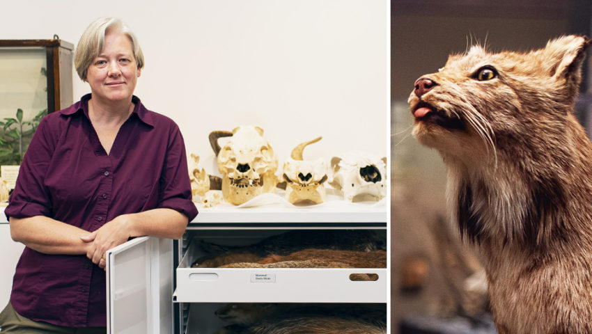 Craft Culture: The Surprisingly Uplifting World of Taxidermy