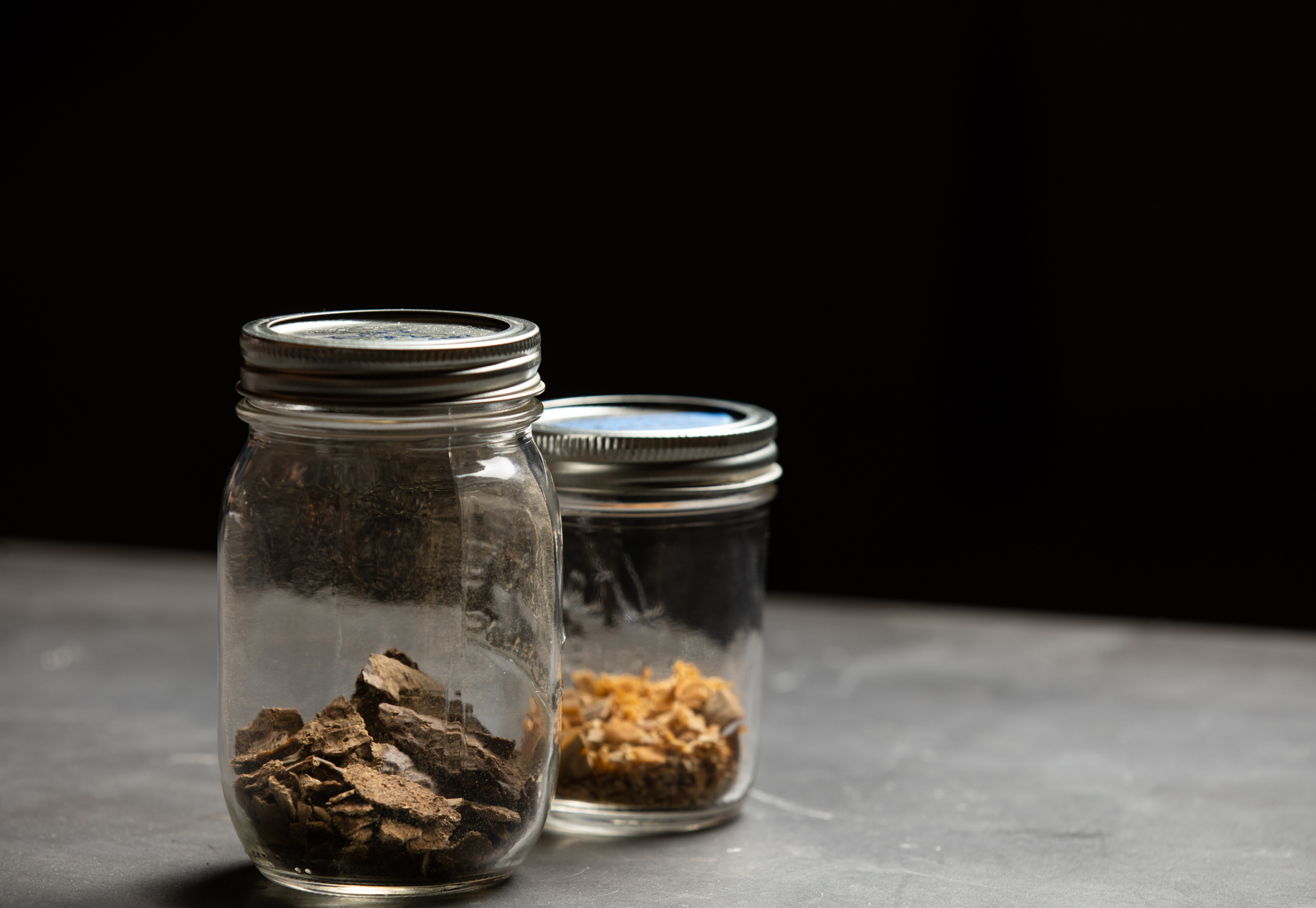 Dried kveik yeast samples collected from Norway // Photo by Tj Turner, yeast courtesy of Chip Walton, Chop & Brew