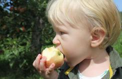 Amaze N Apples Package
