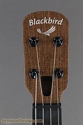 Blackbird Ukulele Farallon EKOA Tenor Ukulele, w/sound port NEW Image 13
