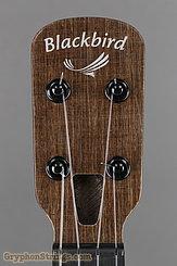 Blackbird Ukulele Farallon EKOA Tenor Ukulele NEW Image 12