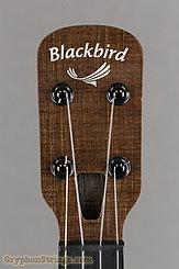 Blackbird Ukulele Clara, MISI pickup, Concert NEW Image 10