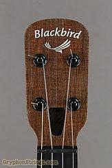 Blackbird Ukulele Farallon EKOA Tenor, Misi Pickup NEW Image 10