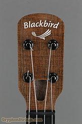 Blackbird Ukulele Clara, Concert NEW Image 10