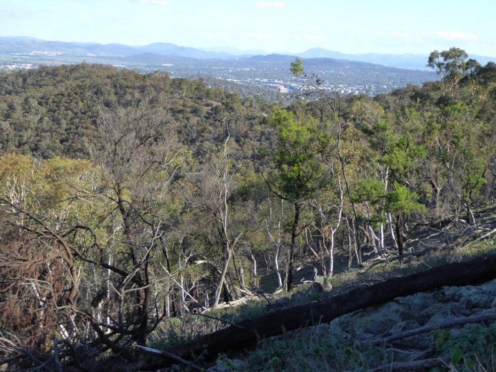View from Mt Ainslie.jpg
