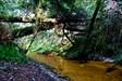 O ribeiro log image