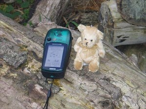 The Bear at his home cache 10th October 2004