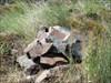 ??? log image