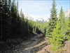 The nice wide forestry trail