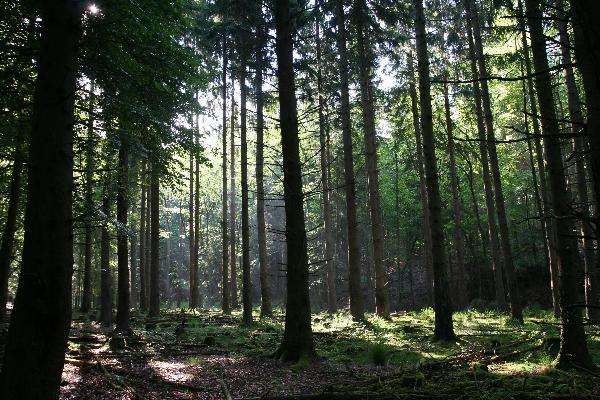romantische Wälder