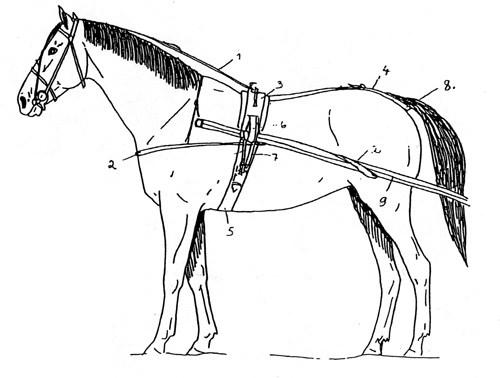 Hevonen ravivaljaissa