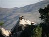 14_animais da montanha log image