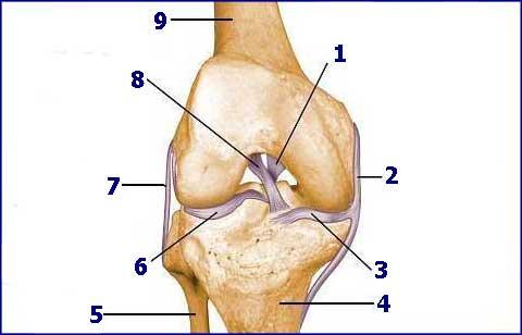 schema kolene