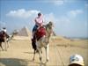 geopig #2 on a camel