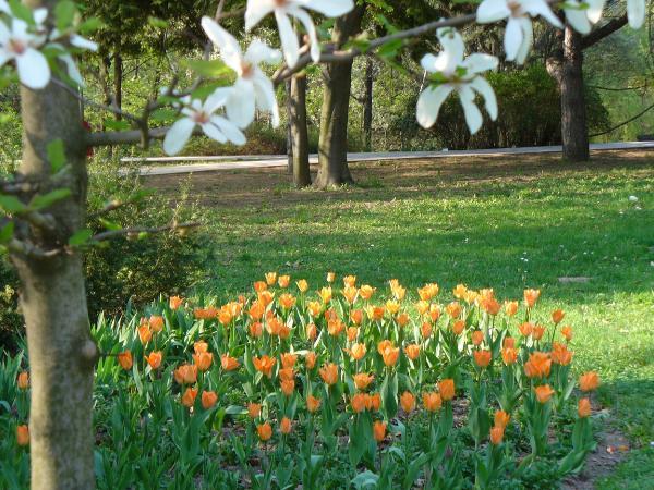 Jarný park