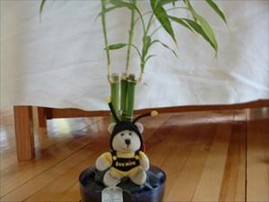 Bee Mine in the Bamboo.JPG