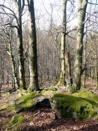 Stromy pobliz skalky