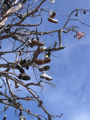 Shoe Tree Big Bear Ca Shoe Trees On Waymarking Com
