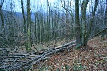 Padly strom