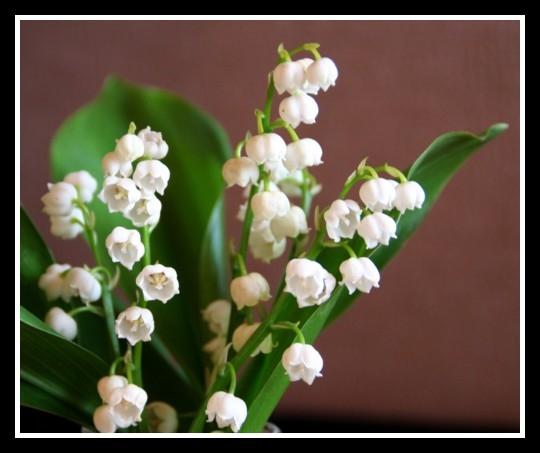 ville hvite blomster