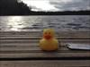 Duckie at Strålsjön...
