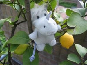 GER in lemon tree
