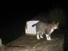 O miau Tareco àquela hora 01H00 ...