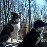Team SAR-Dogs