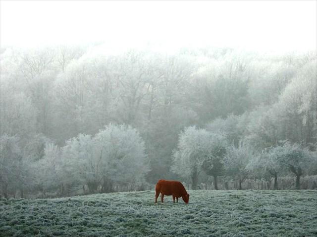 Hiver en Limousin